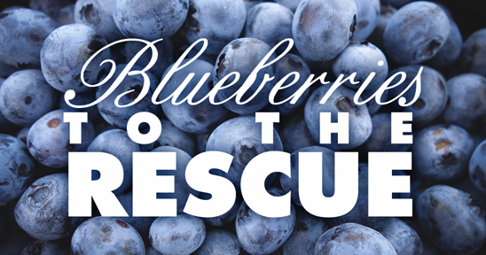 blueberries and plaque